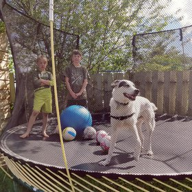 Zep on the trampoline