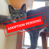 ADOPTION PENDING.png