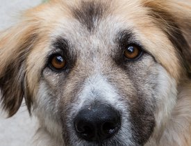 Dogs for Adoption | BVSPCA