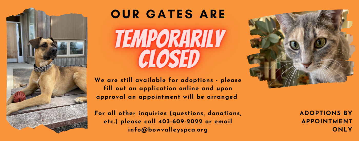 Temporary Closure Banner.png