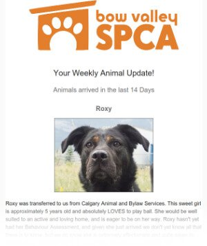 Animal update Email Sample